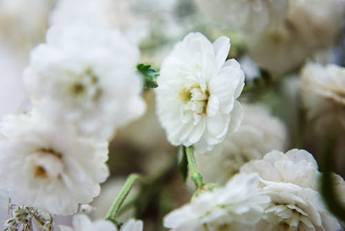 一束花, 增長, 天性, 專注 的 免費圖庫相片