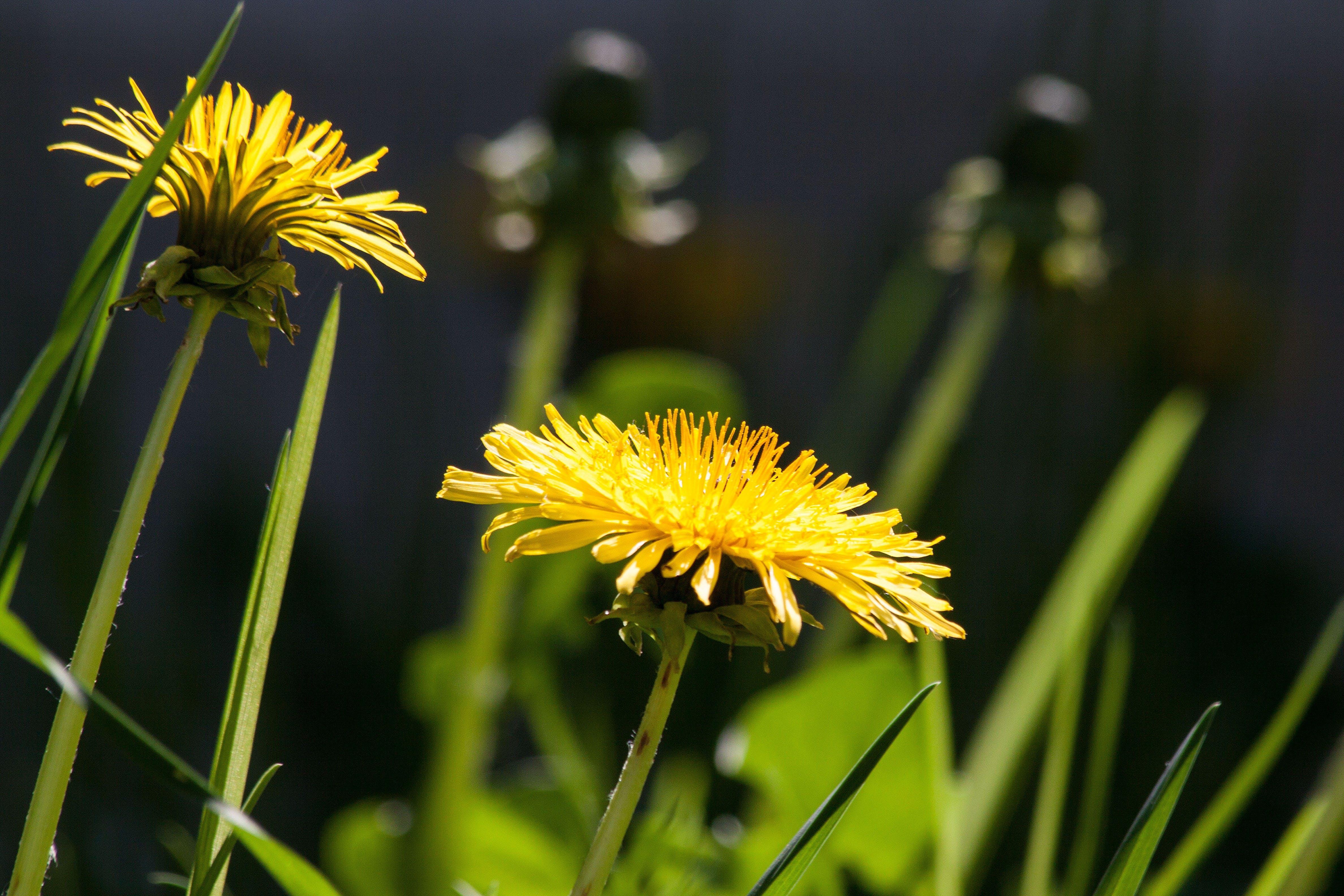 Bokeh Shot of Yellow Flower during Daytime