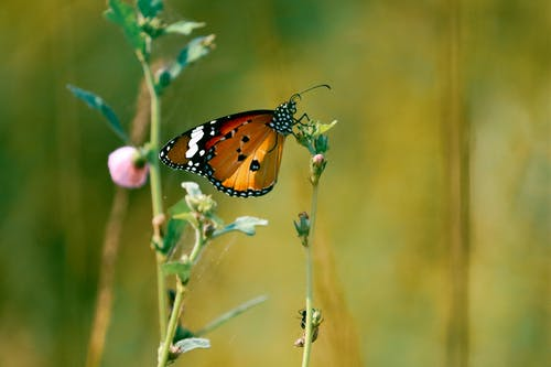 Butterfly Perched on Plant Stem
