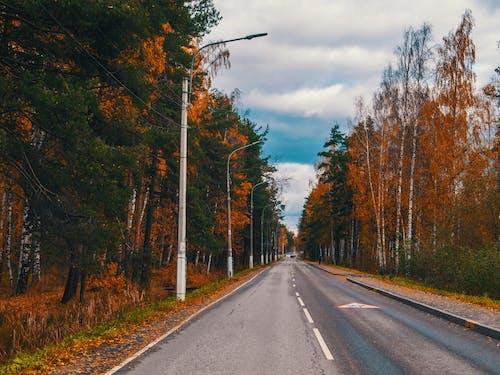 Road Between Green and Orange Trees