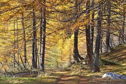가지, 간, 갈색의 무료 스톡 사진