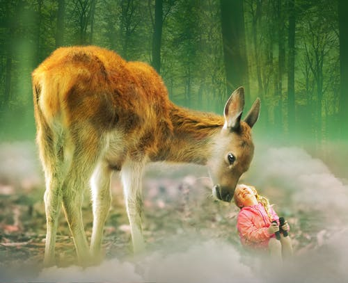 Immagine gratuita di amico, animale, caccia