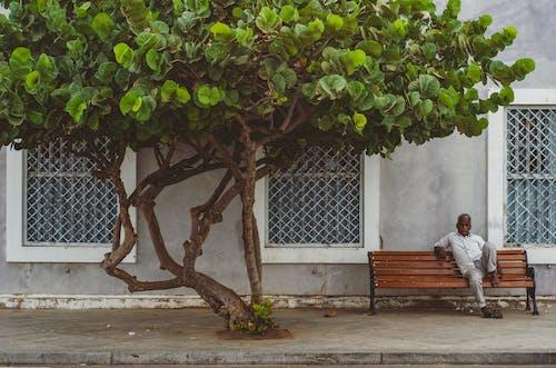 Tree on Concrete Pavement