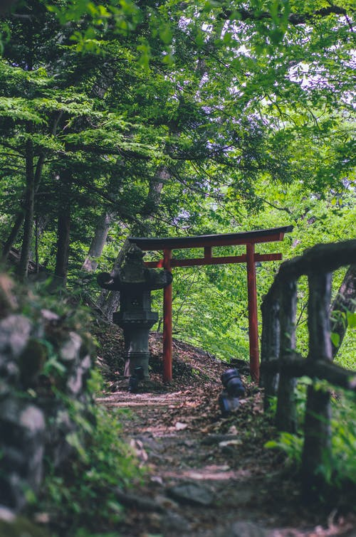 Brown Wooden Gazebo in the Middle of Forest