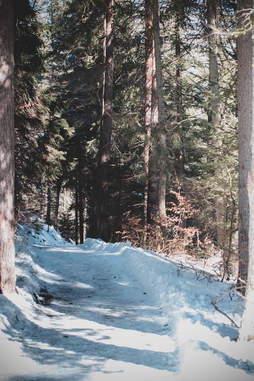 Foto stok gratis musim dingin, musim salju menyenangkan, pesona musim dingin