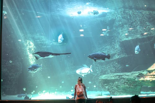 Woman in Red and White Dress Standing in Front of Aquarium With Fish