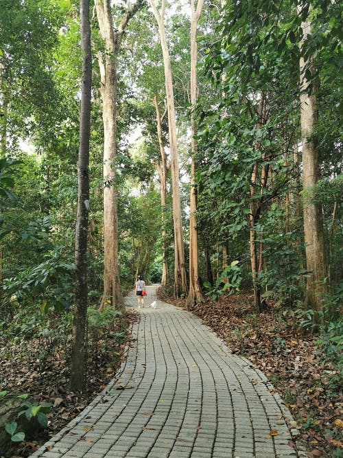 Free stock photo of bukit batok nature park, dogs, greenery