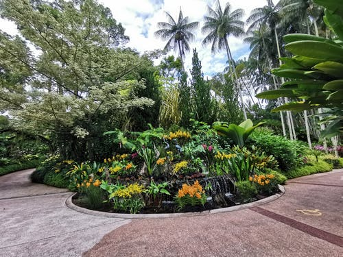 Free stock photo of coconut trees, flowers, greenery