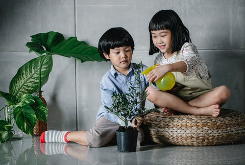 Adorable Asian kids spraying houseplants together