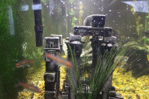 Foto profissional grátis de aquário, embaixo da água, peixe