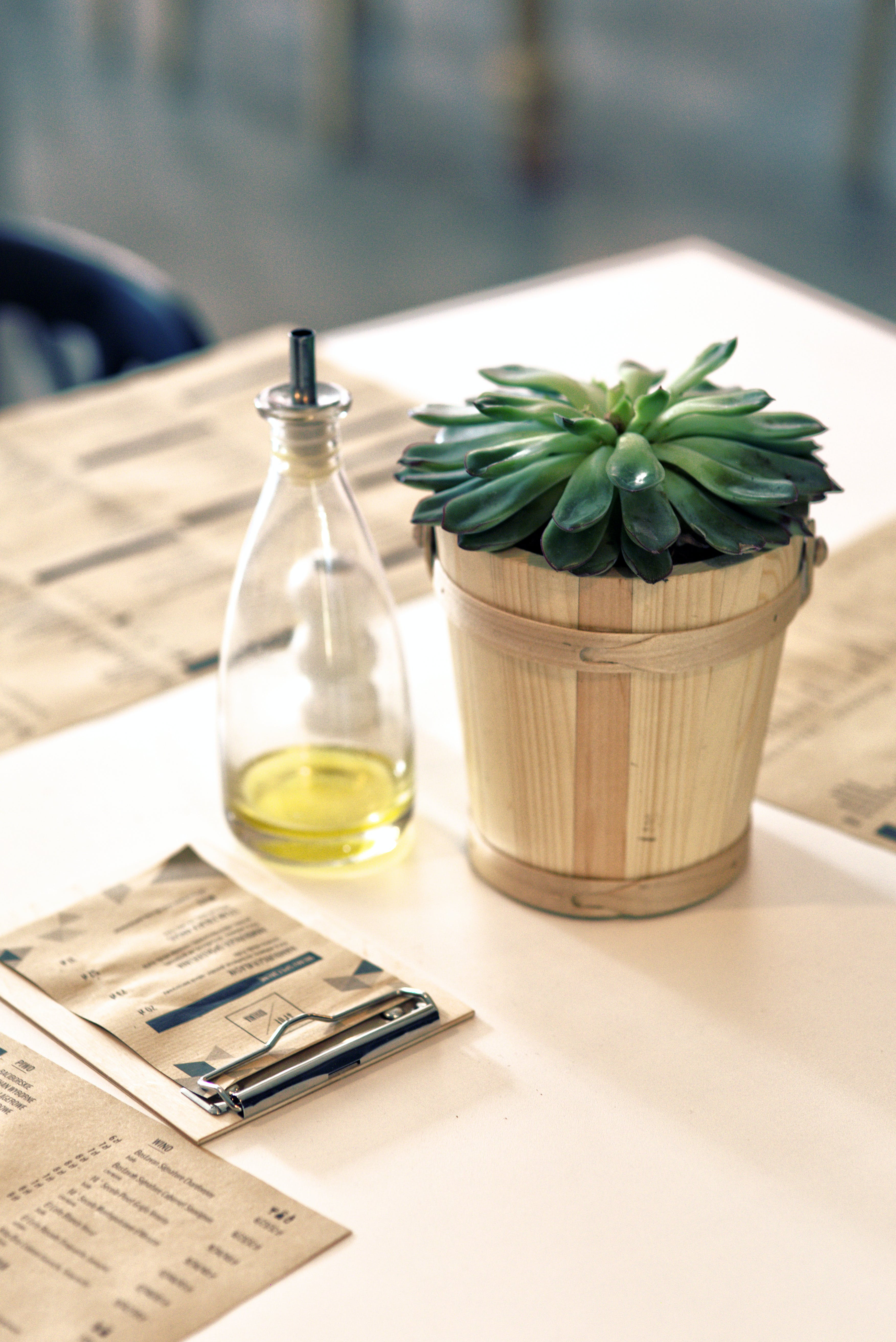 Plant & oil on the table