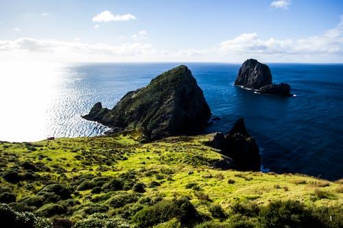 クリフサイド, ニュージーランド, 崖, 崖の海岸の無料の写真素材