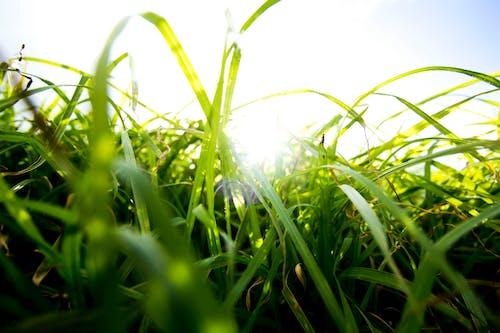 きれいな空気, 夏, 太陽, 常緑樹の無料の写真素材