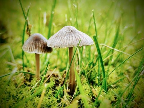 Immagine gratuita di autunno, bellezza nella natura, cadere, colori autunnali