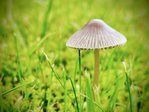 Immagine gratuita di autunno, bellezza nella natura, cadere, cibo