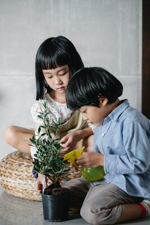 鉢植えの観葉植物の世話をしている愛らしいアジアの小さな兄弟