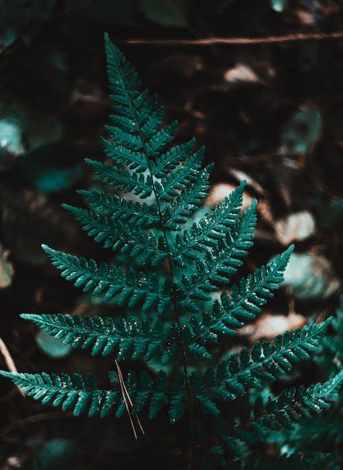 Photo of a Dark Green Fern