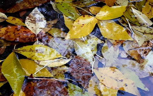 Ảnh lưu trữ miễn phí về giọt mưa, lá mùa thu, lá rụng