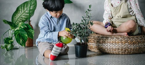 Crop adorable Asian siblings wearing casual outfits sitting on floor and spraying lush potted houseplant