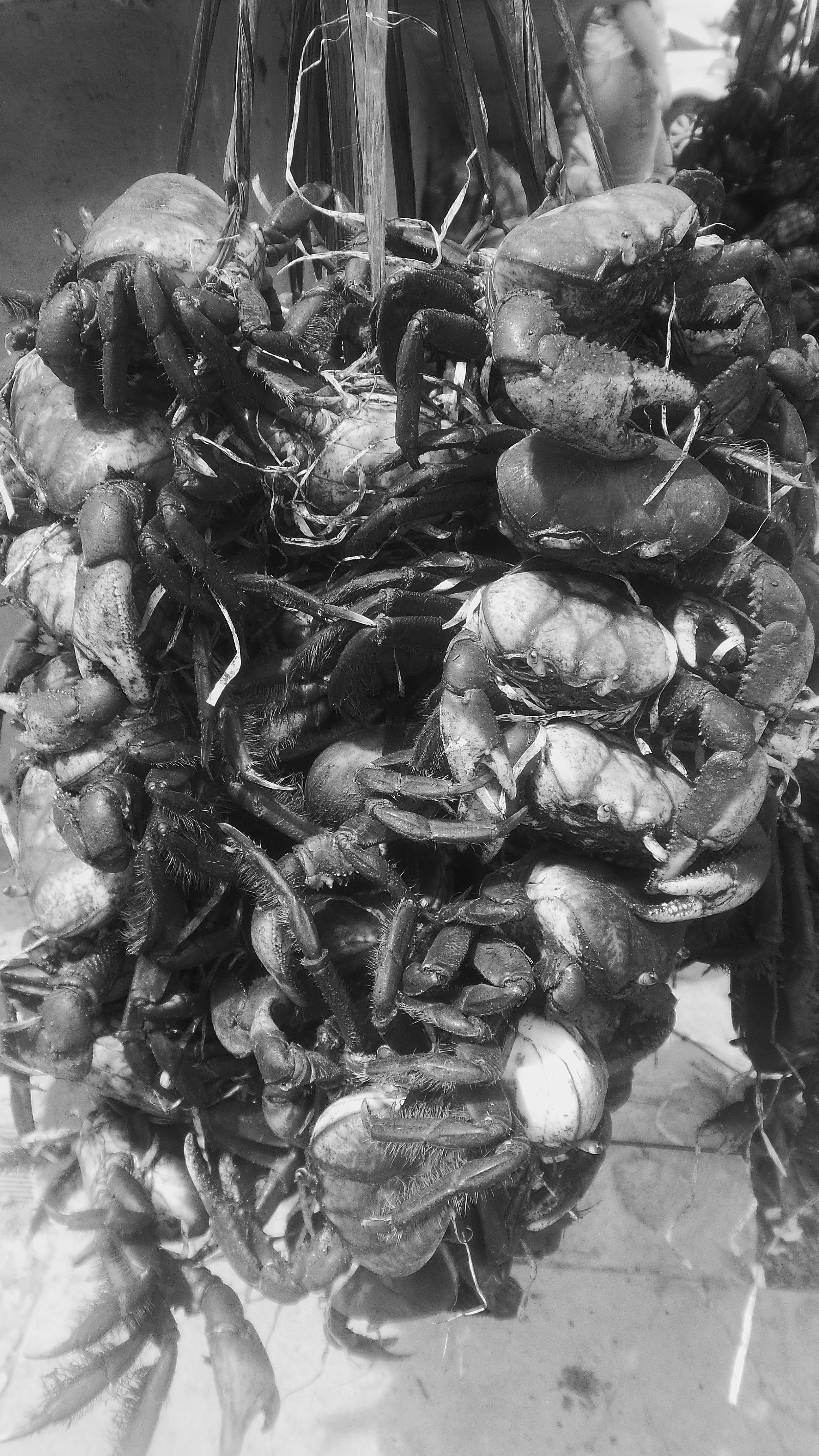 Free stock photo of animal, animals, crab, crawfish