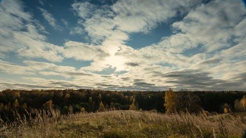 Photos gratuites de arbre, arbres, aube, automne