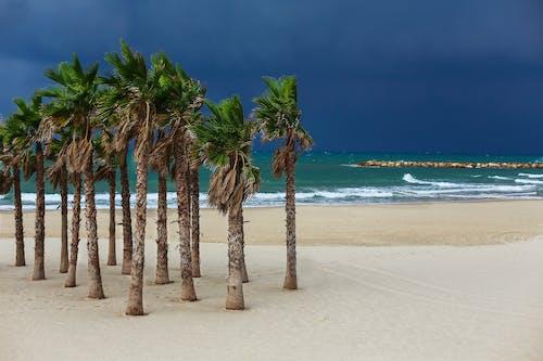 Idyllic sandy beach with palms washed by azure sea