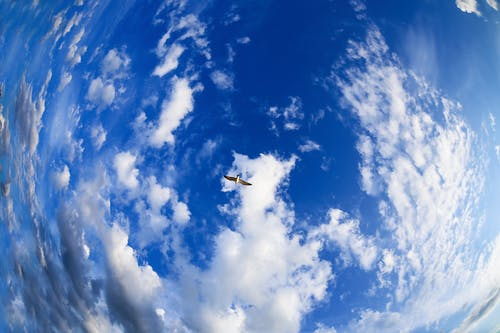 From below picturesque scenery of big bird soaring with spread wings in clear blue sky