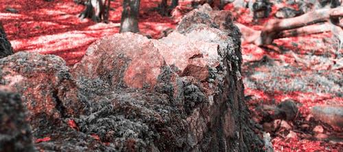 Ilmainen kuvapankkikuva tunnisteilla galway, irlanti, karmiininpunainen, kivet