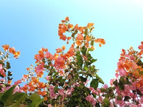Kostenloses Stock Foto zu blumen, sommer, sonne, garten