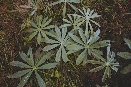 Бесплатное стоковое фото с зеленый, лес, природа, угрюмый