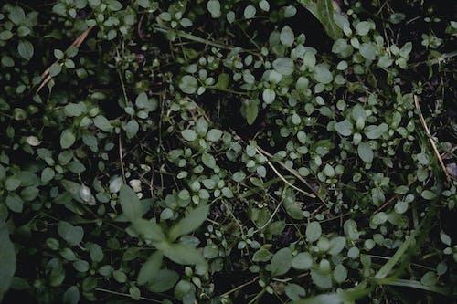 çiçek, karamsar, karanlık, orman içeren Ücretsiz stok fotoğraf