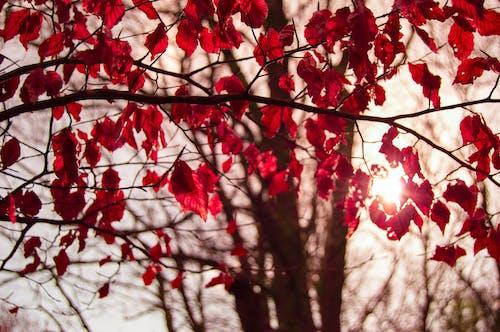 ぶどうの木, 日光, 木, 枝の無料の写真素材