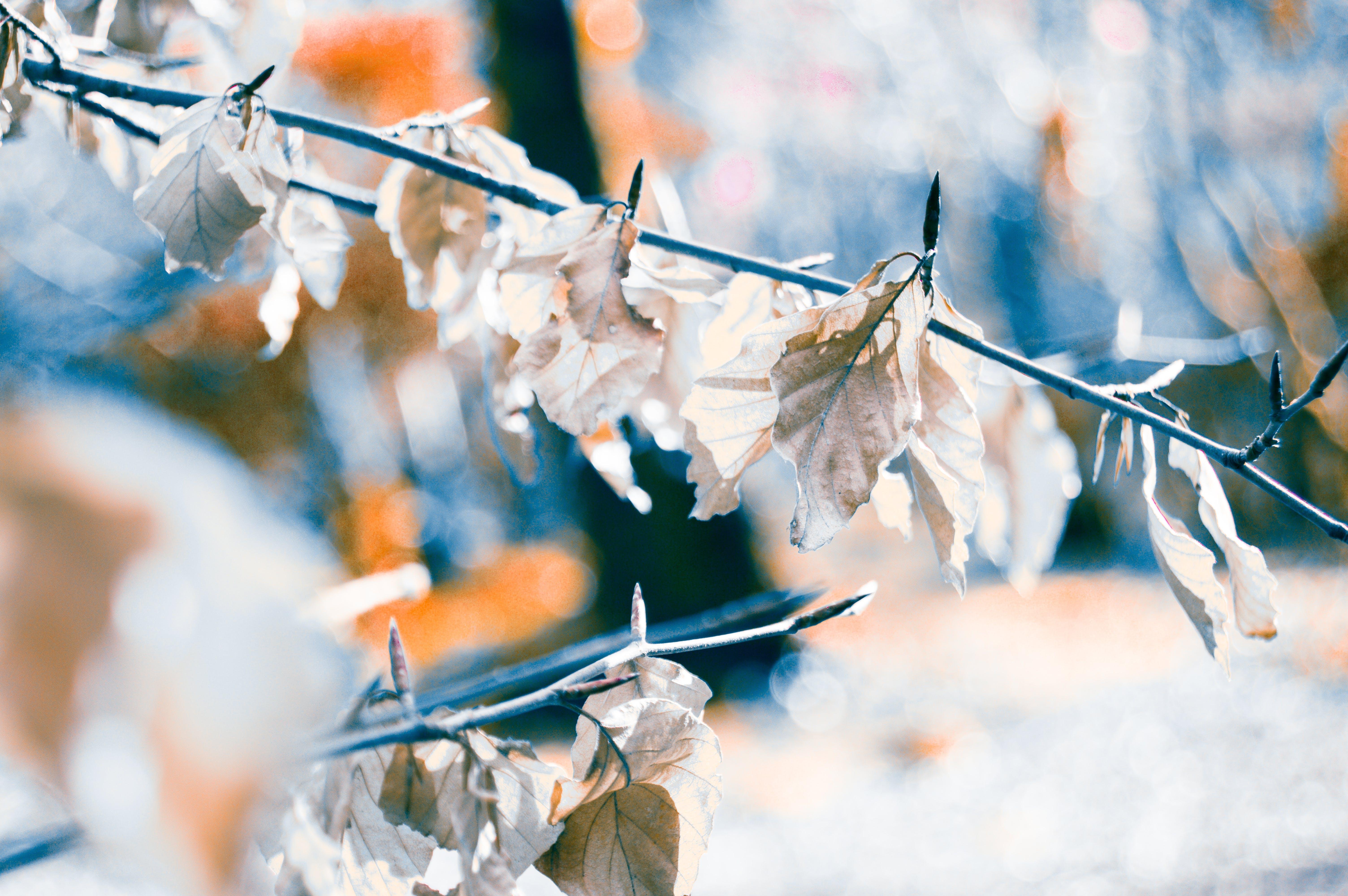 White Leaf Plant