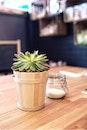 plant, table, flowerpot