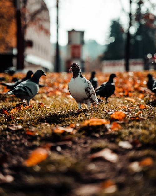 Pigeons walking on grassy lawn in autumn city