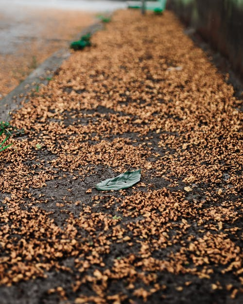 Small dark green solitude leaf on ground surrounded by tiny orange tree seeds in daytime
