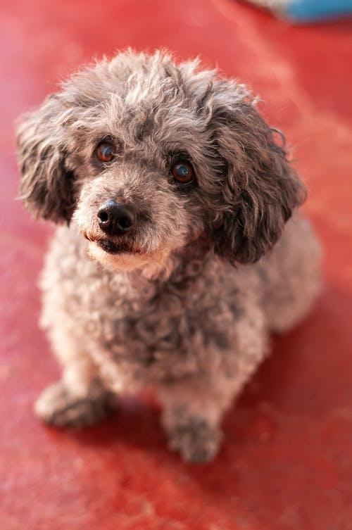 Photos gratuites de amical, animal, animal de compagnie