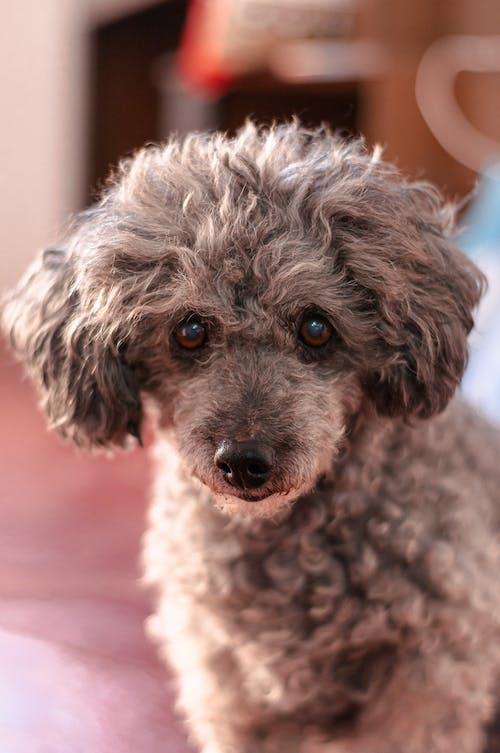 Cute purebred dog sitting at home