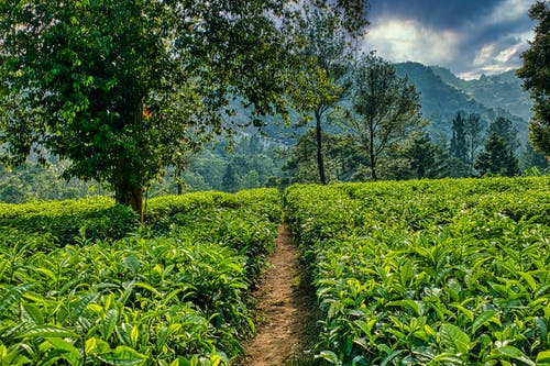 Picturesque scenery of green agricultural fields cultivated on spacious fertile terrain in lush highland on cloudy summer day