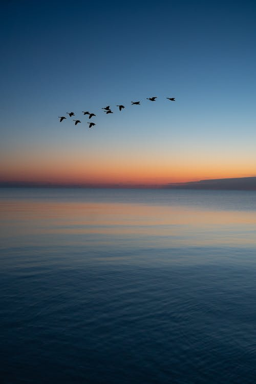 Immagine gratuita di acqua, acqua azzurra, alba, arancia