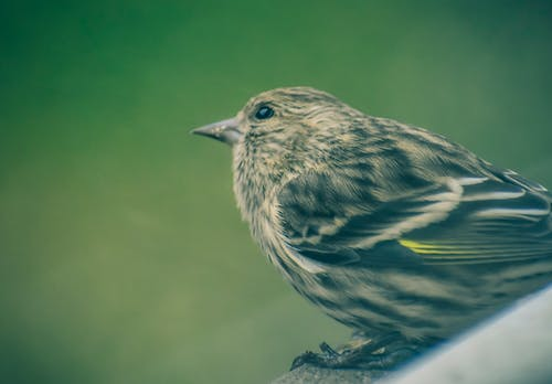 Side view of adorable calm pine siskin sitting on tree branch in green garden