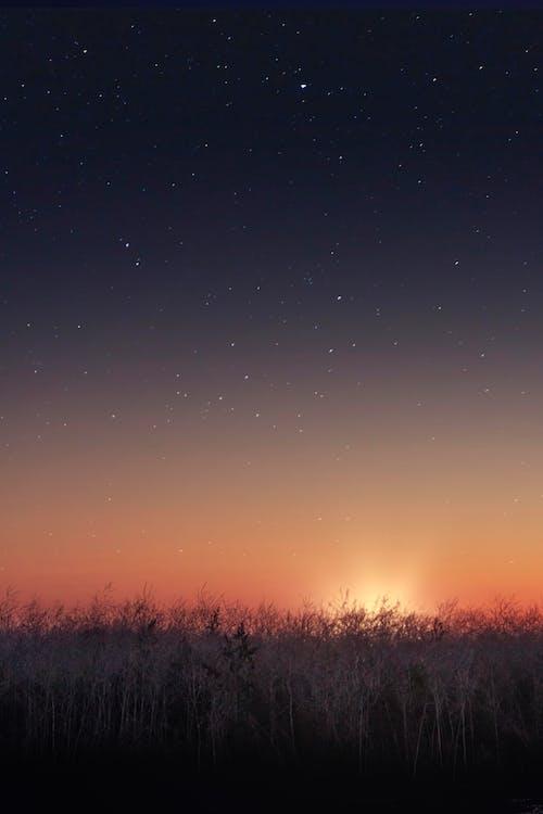 Immagine gratuita di alba, android, arancia, arancione