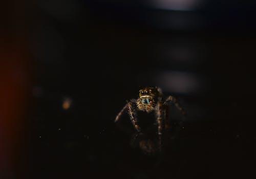 Fotos de stock gratuitas de amenaza, araña, artrópoda