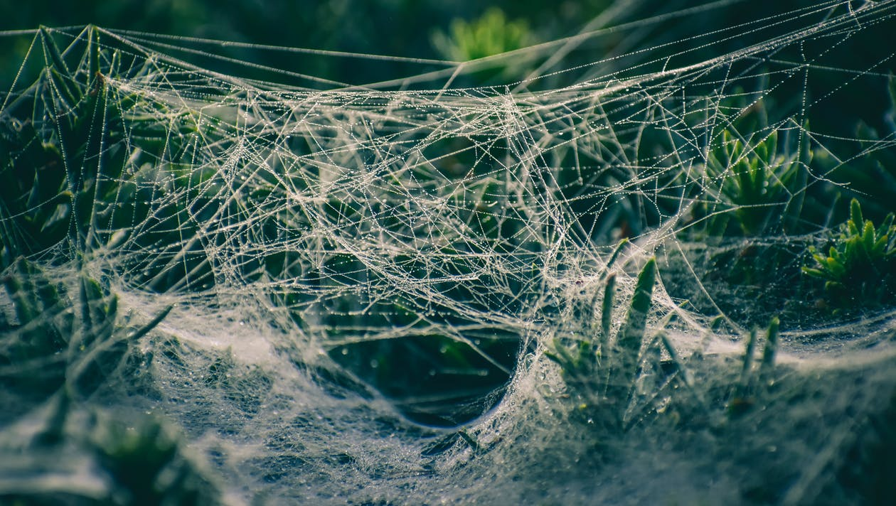 Spider web with small drops of water hanging on green plants in sunlight