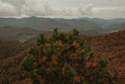Breathtaking scenery of green spruce growing on slope of mountain range covered with lush autumn forest against cloudy sky