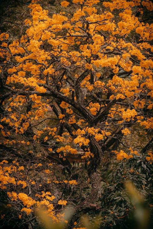 Foto profissional grátis de ao ar livre, arbol, árvore, árvore amarela