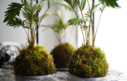 Green Plant on Gray Concrete Pot