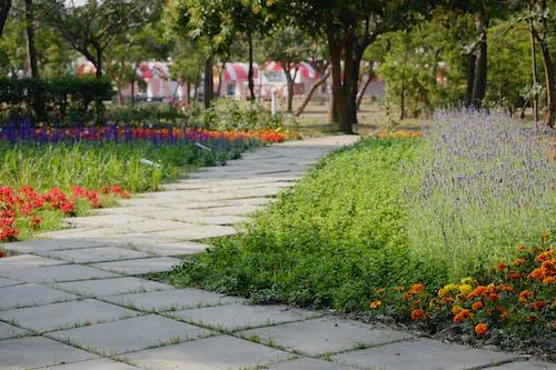 Foto stok gratis bunga, bunga-bunga, bunga-bunga indah, jalan