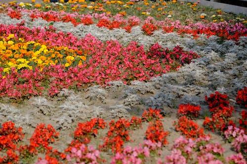 Foto stok gratis baik, besar, bunga buatan, bunga kuning