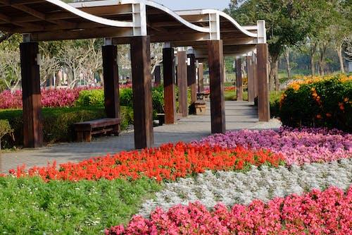 Foto stok gratis alam, bunga, bunga buatan, bunga lonceng